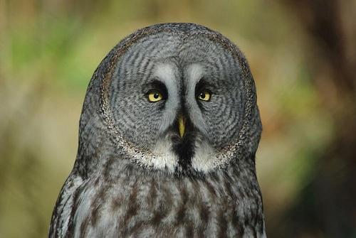 Eye Eye by DaveH64