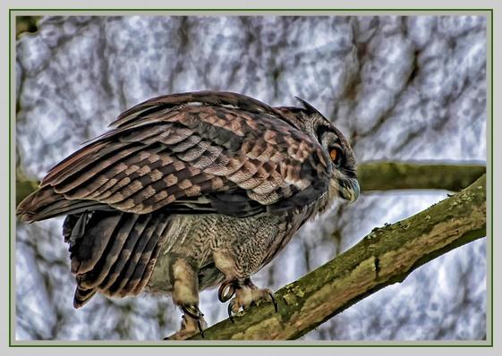 Owl ? by BERTRAM
