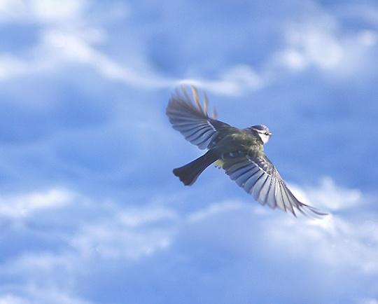 SKYFLIGHT by maratsuikka