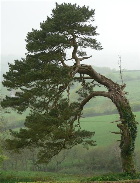 Tree by ValRMN