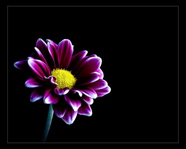 The Farewell Flower by David_Hartshorn