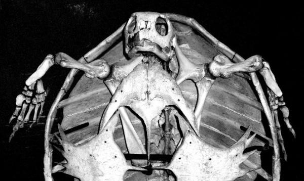 Tim Burton Turtle by roy2d2