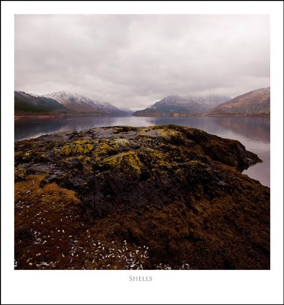 Shells... by Scottishlandscapes