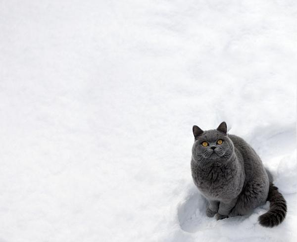 Snow Puss by SueTurner