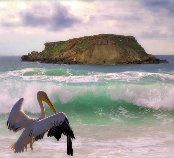 Pelican Dip by exposure