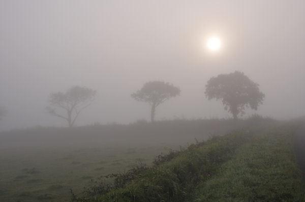 Trees in fog by sebroadbent