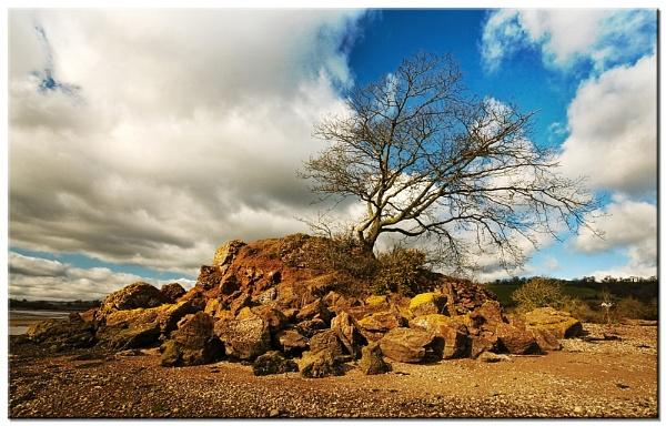 Little Tree by RockArea