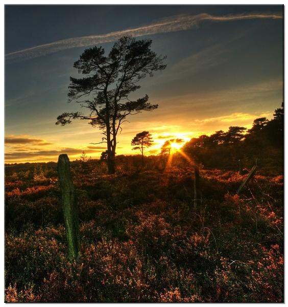 Little Haldon Pines by RockArea