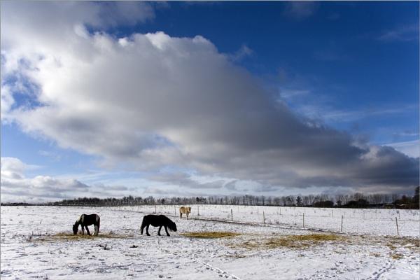 A wintery scene by Monradus