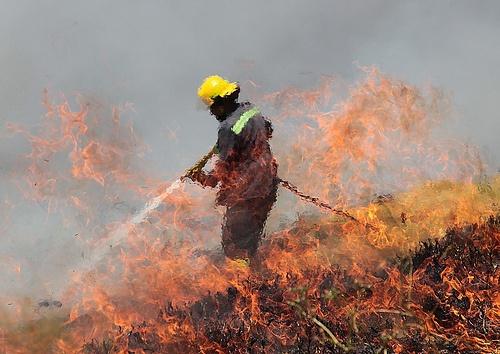 Bush Fire by Yidam