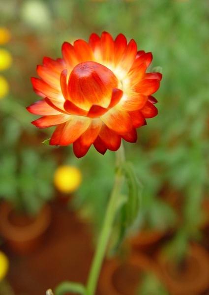 Unbelievable Flower by faraidoon