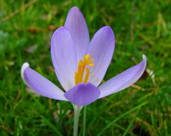 Spring is coming... by LindaSJ