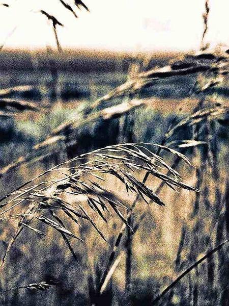 IR fields edge by Nokin of Nonac