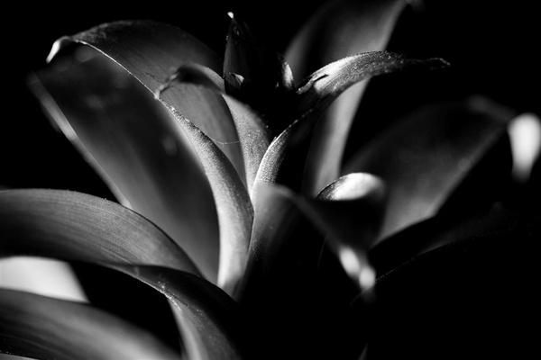 Plant Life by moonlightallan