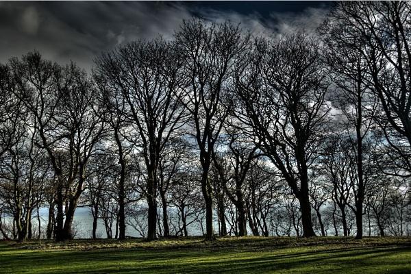 Edinburgh through trees by donnagreen