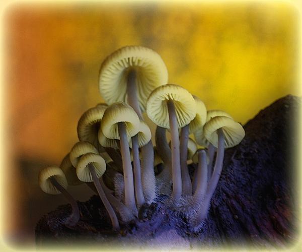 Fungi by SlowSong