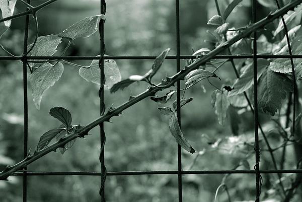 Life, pain & Hope... by FrancescoErcolano