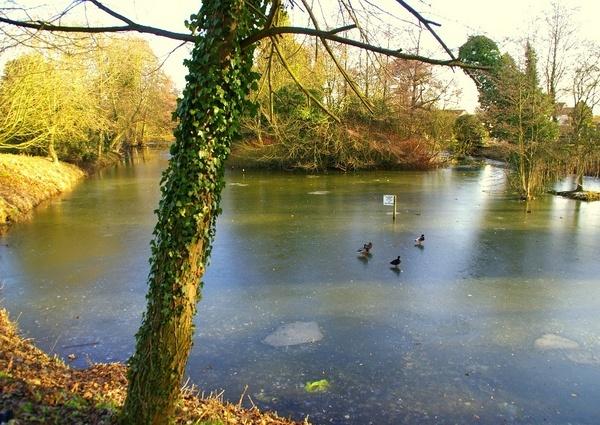 Frozen pond by samjackster