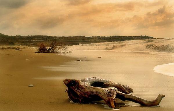 Akamas Driftwood by exposure