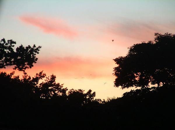 Sunset Siloette by EmzLou1980