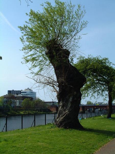 Twisted Tree by EmzLou1980
