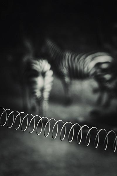 zoo by steve allsopp