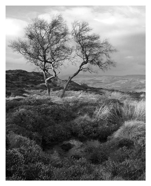 Peak Moorland II by ian.daisley