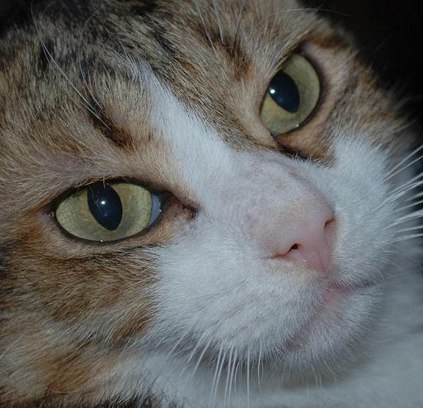 Cats eyes by stuart davies