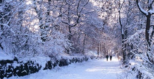 Winter Walk by Falconer