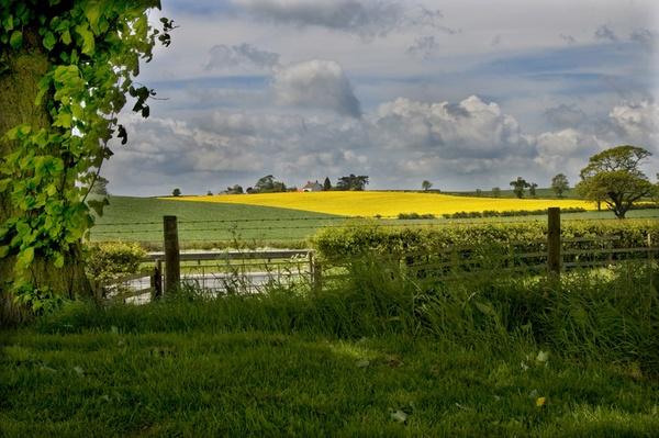 a19 landscape by patman