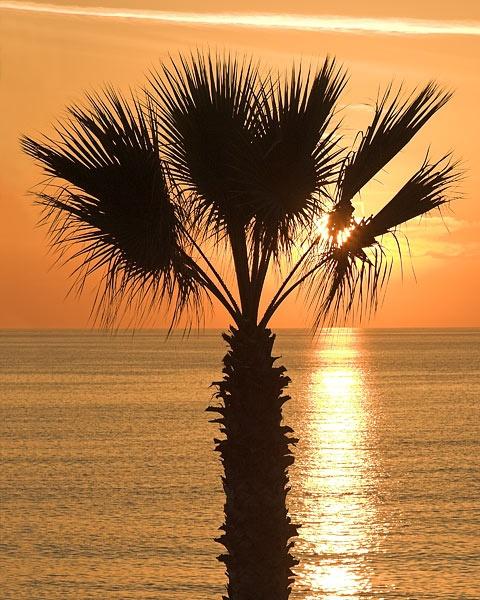 Sunset Silhouette by Camaro