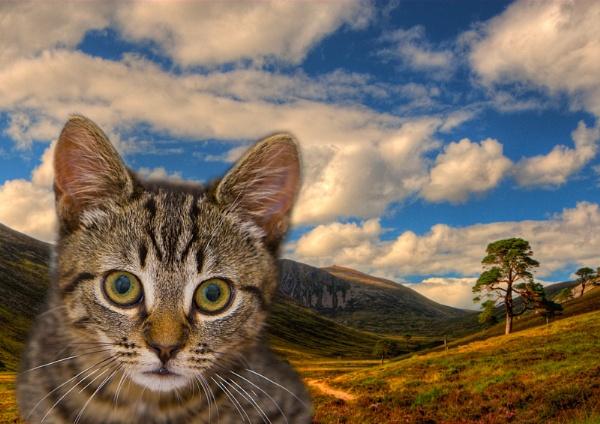 PET IN GLEN DERRY by JASPERIMAGE