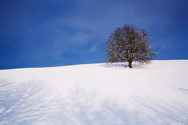 Winter Chestnut by Kris_Dutson