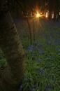 spring into life