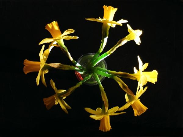 Daffodil Moon by puffant