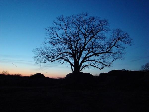 Lone  Tree by WaltP