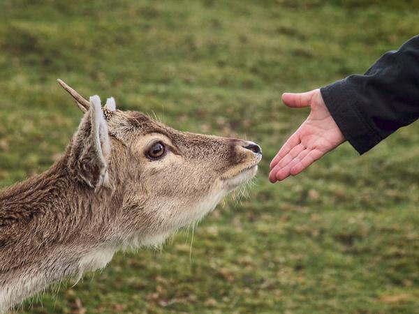 Sika deer & Deer Frend. by fishing