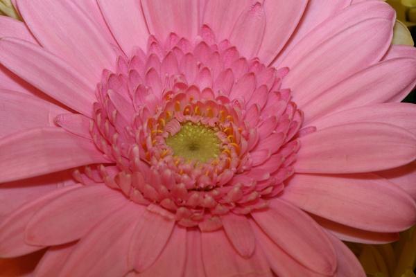 FLOWER by Jimmy31