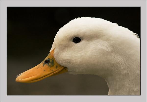 No !!! I\'m A Duck..lol by SoulOfNature