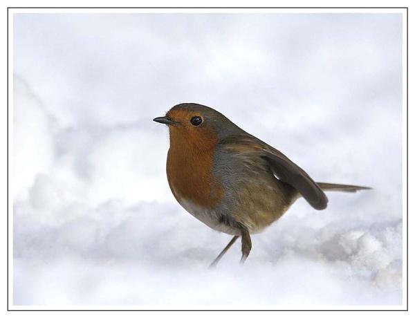 Snow Time........... by Karrol