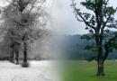 Seasonal Contrast