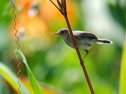A kind of bird.