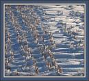 snow and cornstubble
