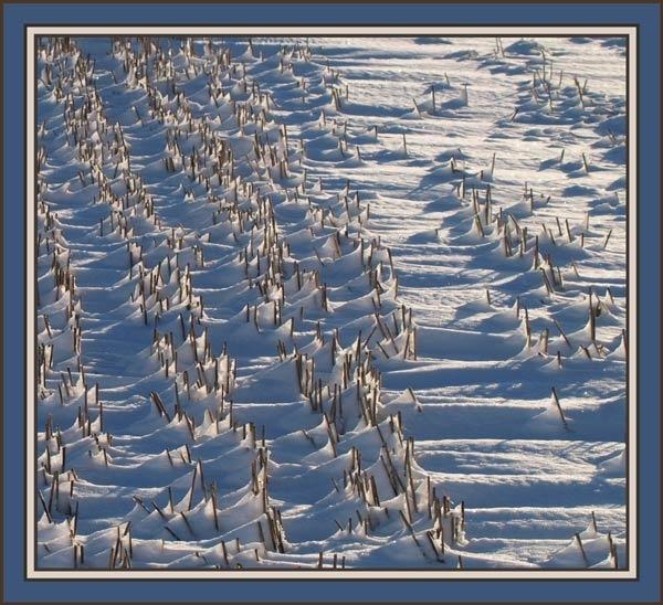 snow and cornstubble by jayjay52
