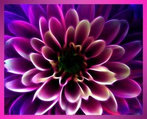 Digital flower by Sean_Dillon