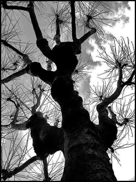 Harrow Road Trees by Stegski International Feb 2009 by STEGSKI