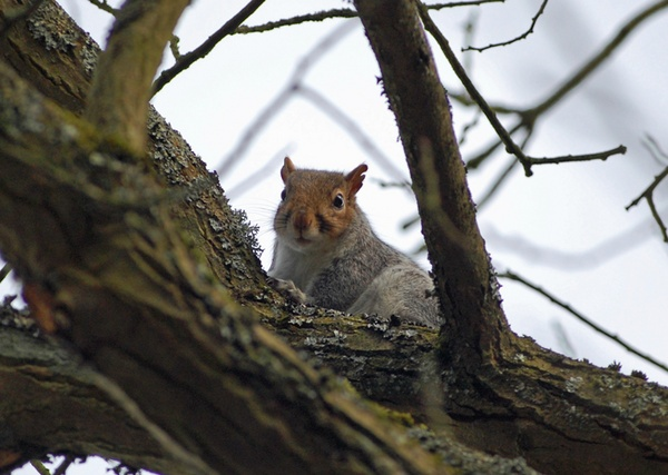 Inquisitive Squirrel by johnsimmons