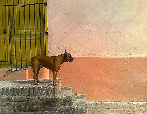 Dog Cubanny Style by paskinmj