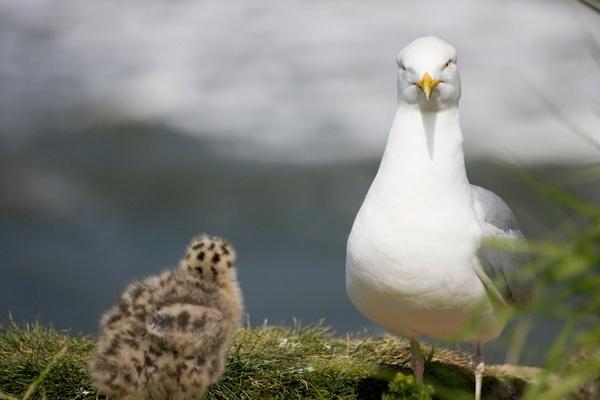 BabyBird by Varanus