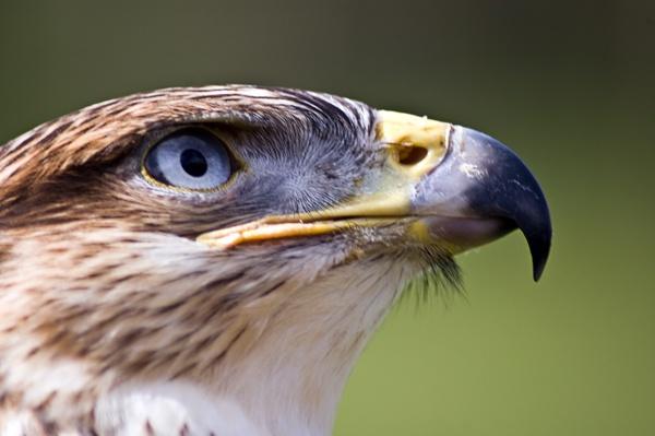Beaky by jayman